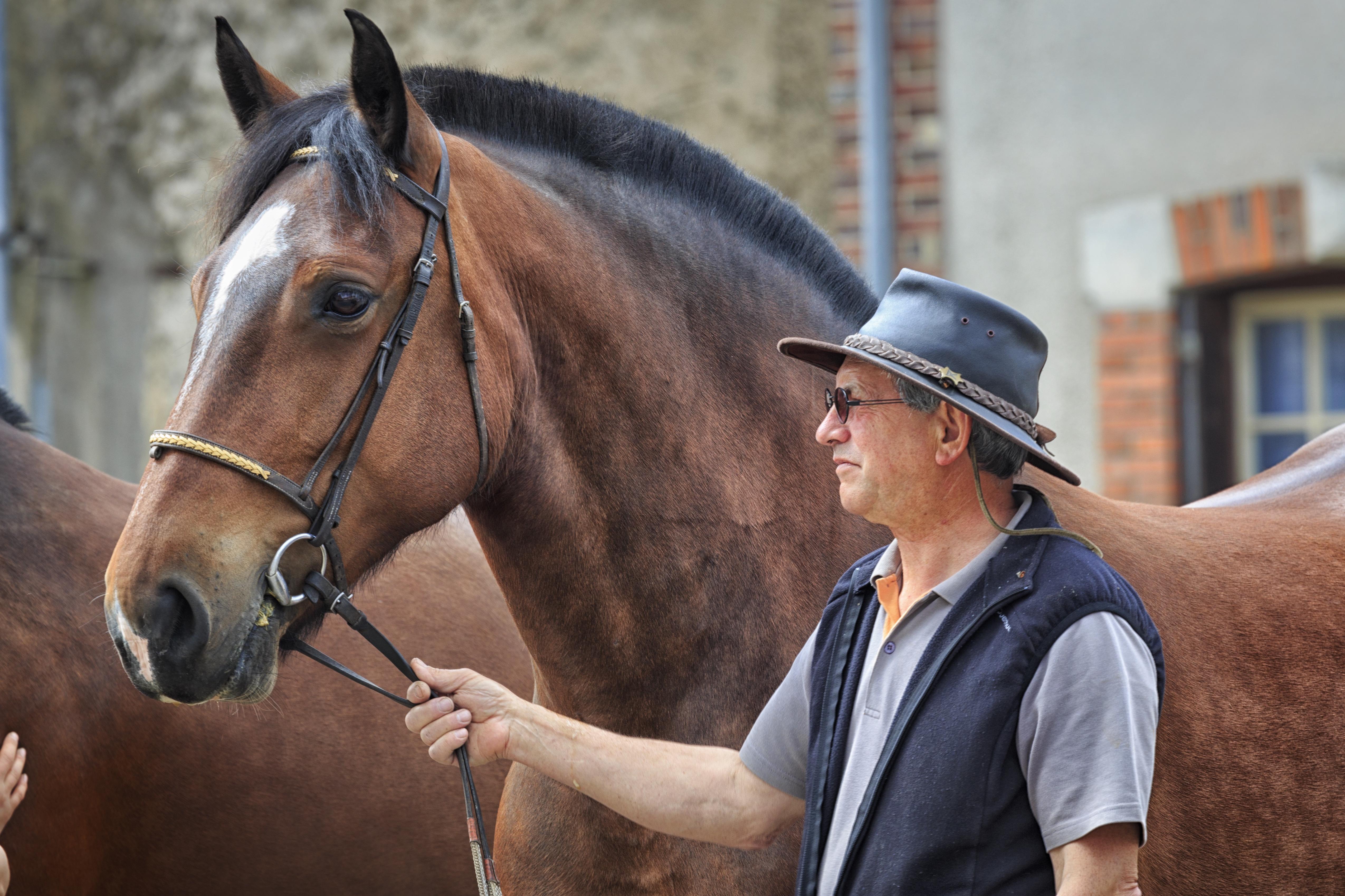 Barnet Horse Fair