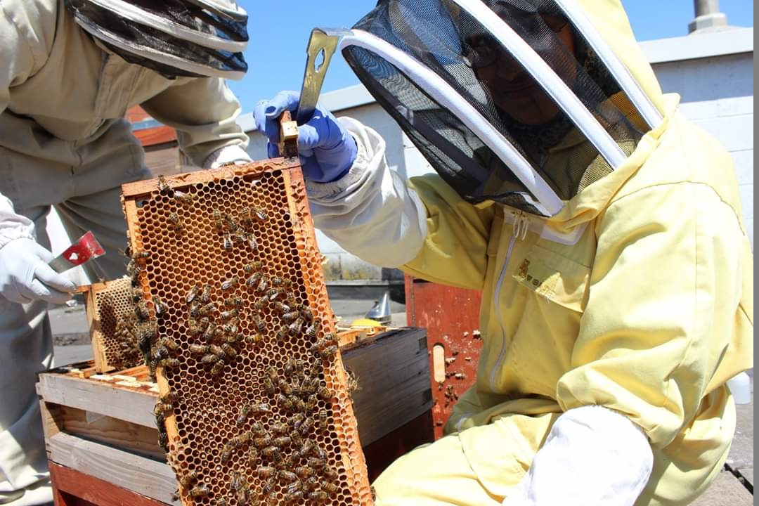 Bee-keeping at the honey face