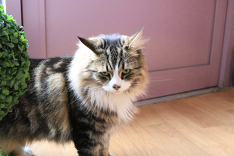 <p>The Cat Cafe - <a href='/journals/catcafe'>Click here for more information</a></p>