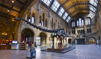 <p>The Natural History Museum - <a href='/triptoids/nhm'>Click here for more information</a></p>