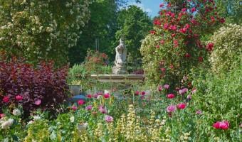 <p>The Rose Garden, Hyde Park - <a href='/journals/rose-garden-hyde-park'>Click here for more information</a></p>