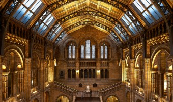 <p>Natural History Museum Lates - <a href='/journals/natural-history-museum-lates'>Click here for more information</a></p>