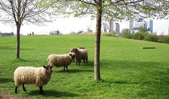 <p>Mudchute Park & Farm - <a href='/triptoids/mudchute-park-and-farm'>Click here for more information</a></p>