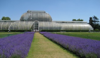 <p>Kew Gardens  - <a href='/triptoids/kew-gardens'>Click here for more information</a></p>