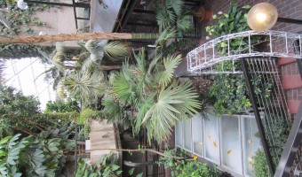 <p>The Barbican Conservatory - <a href='/journals/the-barbican-conservatory'>Click here for more information</a></p>