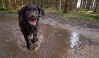 <p>A Dog Walker&#039;s Weekend - <a href='/articles/dog-friendly-parks'>Click here for more information</a></p>